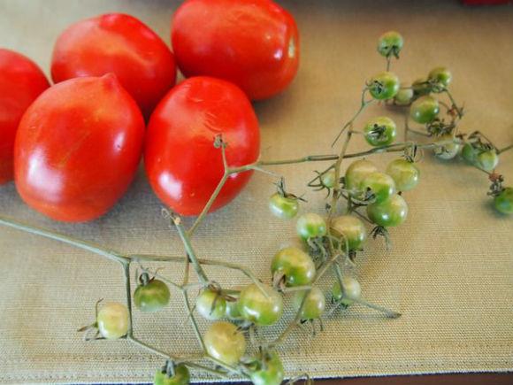 ah_tomato1.jpg