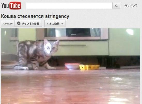 ah_cat_shy1.jpg