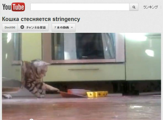 ah_cat_shy2.jpg