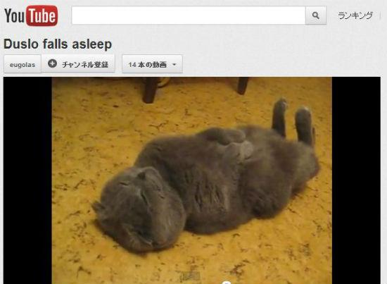 ah_cat_sleep.jpg