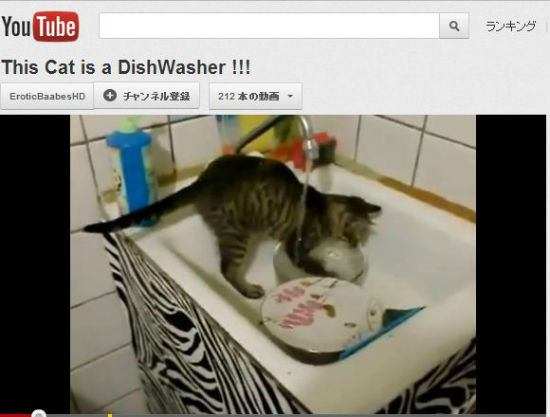 ah_cat_wash.jpg