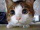 大好きな綿に本当に目の色が変わる! まんまるの目がかわいいネコ