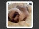 開始1時間でフォロワー数10万越え 前田敦子がTwitterに大・降・臨!!