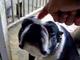 「お漏らしは連帯責任」 飼い犬たちを叱る飼い主から超展開で愛が溢れる動画