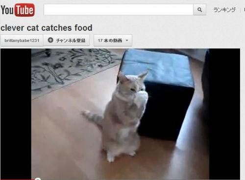 ah_cat_catch.jpg