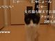 玄関開けたら2秒でにゃんこ デレっぷりがすごいネコのお出迎え動画