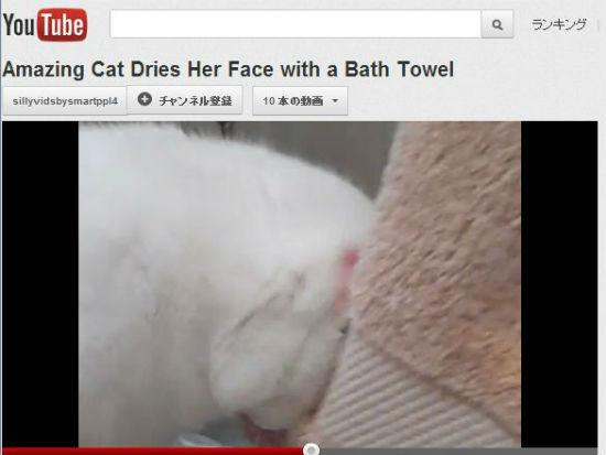 ah_cat_towel.jpg
