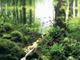 【画像アリ】「世界水草レイアウトコンテスト2012」の受賞作品がどれも美しすぎてつらい