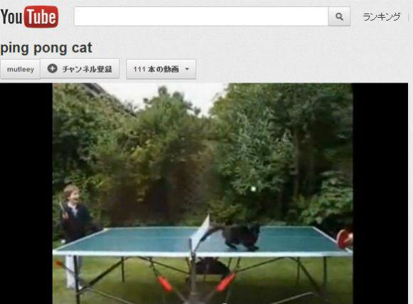 Ah_cat_pingpong.jpg