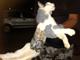 ネコを利用した脱獄計画がブラジルの刑務所で 未然に防がれる