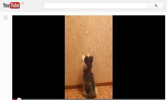 ah_cat_wall.jpg