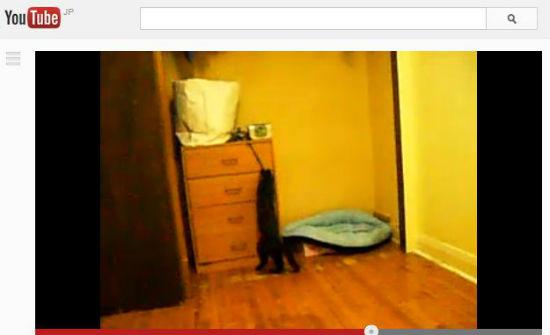 ah_cat_alarm.jpg