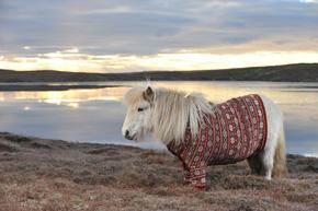 ah_pony2.jpg