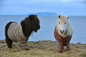 ah_pony3.jpg