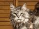 ギネス記録の世界一長いネコ、Stewieが亡くなる