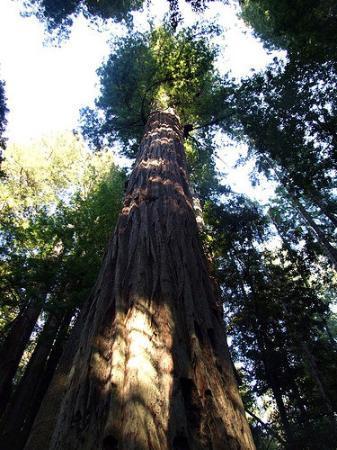 気になって夜も眠れないので見に行ったらいいんじゃないかと思う世界の巨木奇木