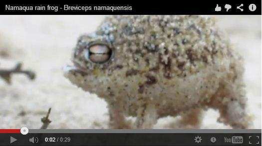 ah_frog.jpg