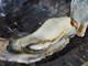 とれたてぷりぷりの牡蠣が1個100円だと! しまなみ海道で夢のような七厘バーベキューを味わってきた