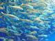 「イワシに活を入れるためマグロ投入」はマスコミの創作? 名古屋港水族館に真相を聞いてみた