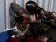 ナマケモノ界のムツゴロウ?:よーしよしよしよしよしよし ネコをかわいがりまくるナマケモノ