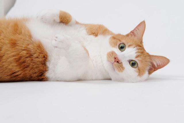 【貓之日】從「肉球相」看喵星人的性格