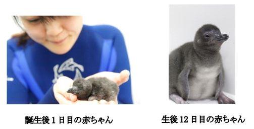 ah_penguin1.JPG