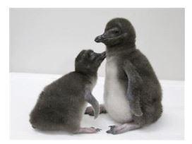 ah_penguin2.JPG