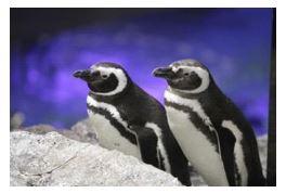ah_penguin3.JPG