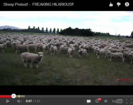 ah_sheep1.png