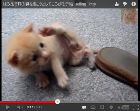 ah_cat2.png