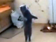 猫立ちぬ:2足歩行するネコの歩き方がまさかの「前髪クネ男」さんじゃないですか
