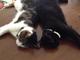 ネコだってオリンピックに出たいんニャ! 夢の「ネコリンピック」に参加表明するネコが続々登場