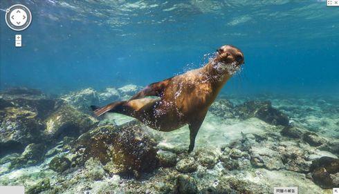 ガラパゴス諸島の画像 p1_39