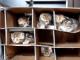 ネコみっちりのネコマンションに入りたい
