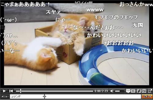 haru_131119neko01.jpg
