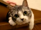 【殺人毛玉】なにこれずっと見ちゃう かわいすぎる猫動画が無限に集まるサイト「Evercat」から離れられない