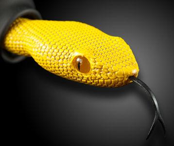 ah_viper2.jpg