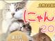 ニコニコでネコの日特集 ドラマ「猫侍」も配信