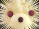 鹿児島で人気の新しい「しろくま」が本当に白熊らしくて食べるのもったいない