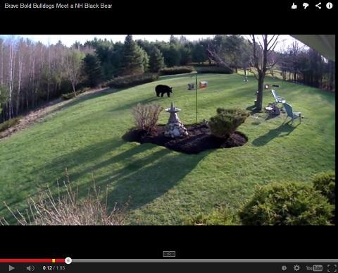 画像(お庭の中をうろうろと歩き回るクマさん)