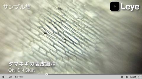 画像(タマネギの表皮細胞)