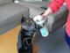ああ〜水がうまいニャ〜(ペロペロ) うちのネコの水の飲み方がなんか変