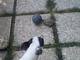 生き物サッカーでカメ対犬のドリームマッチが実現 カメさんの本気っぷりがヤバイ