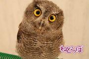 ah_fuku05-1.jpg