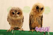 ah_fuku05-2.jpg