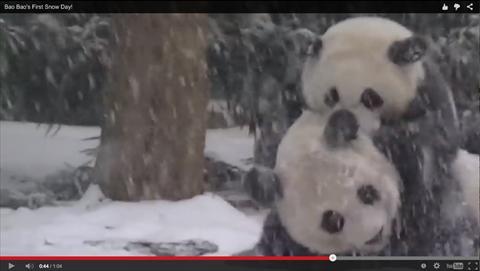ah_panda2.jpg