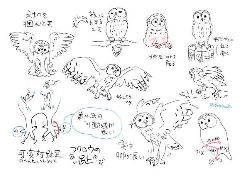 動物の描き方