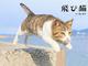 にゃんこがジャーンプ! その瞬間をとらえた写真集「飛び猫」、角川マガジンズから発売