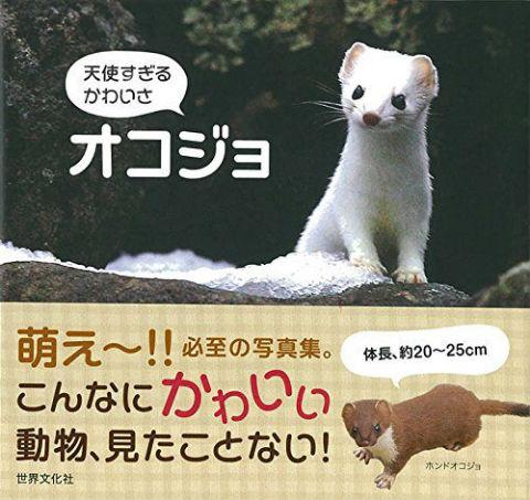 haru_okojo01.jpg