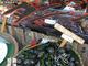 タニシ業界専門誌「月刊タニシ」が1冊無料配信中 タニシクラスタ「うおおおおおおお」